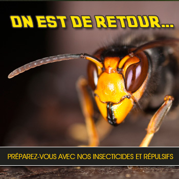 Retour des frelons - Insecticides et répulsifs