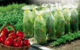 Housses de croissance pour tomates - TOMATOTUBE - 0.6 x 10 M - NORTENE