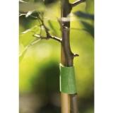 Liens auto-agrippants pour arbres -5 M - TESA VELCRO