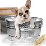 Hygiène et entretien animaux